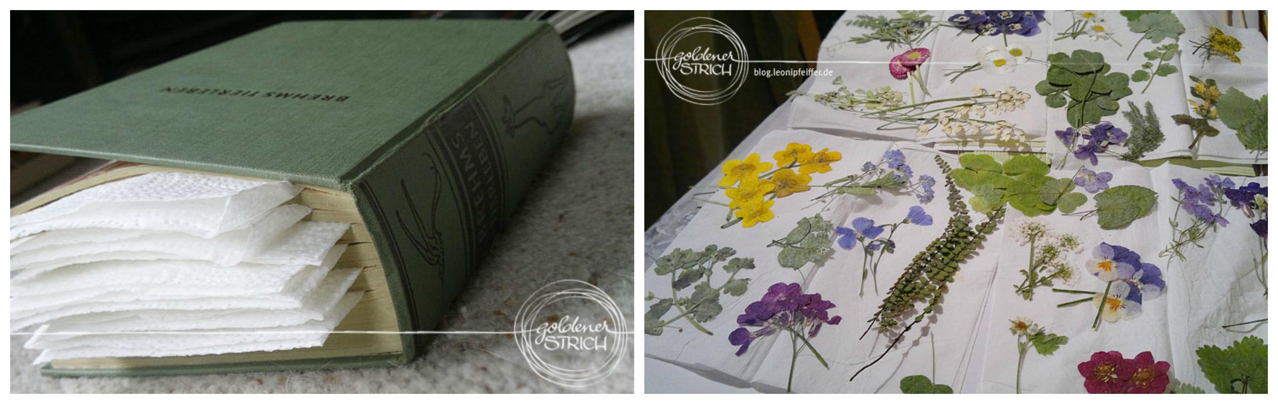 Mit gepressten Blumen Postkarten gestalten