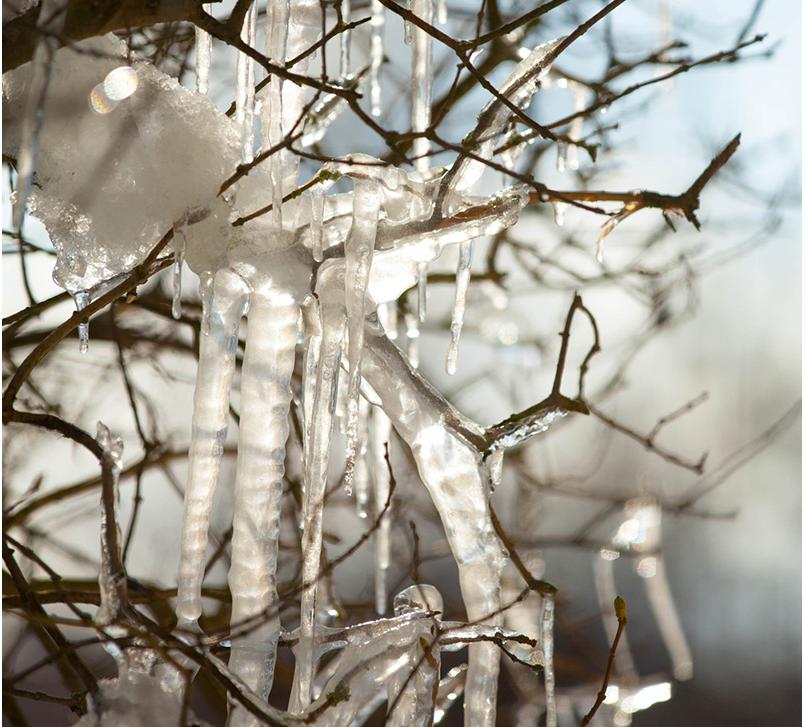 Eis am Strauch