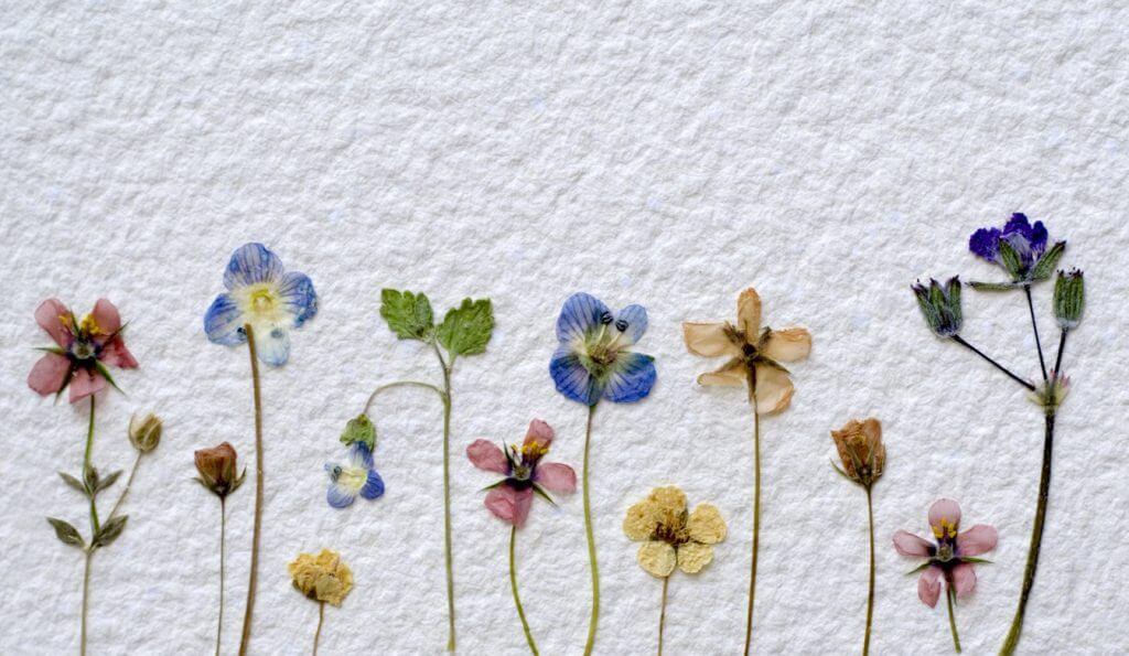 Getrocknete und gepresste Blumen