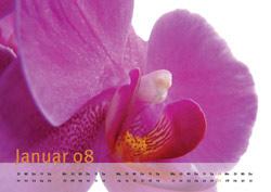 Kalender online gestalten und mit UV-Lack veredelt drucken